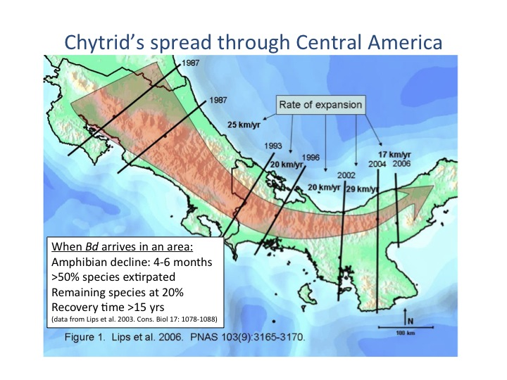 Chytridiomycosis - Amphibian loss us map