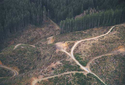 Habitat destruction, alteration and fragmentation