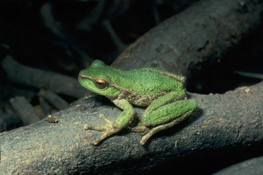 world map of amphibian declines