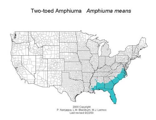AmphibiaWeb Amphiuma Means - Us amphibian distribution maps