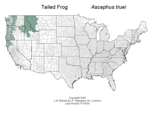AmphibiaWeb Ascaphus Truei - Us amphibian distribution maps