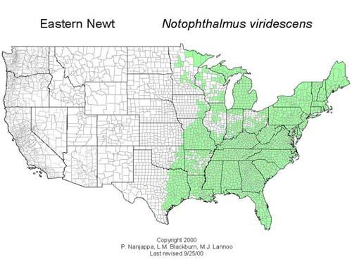 AmphibiaWeb Notophthalmus Viridescens - Us amphibian distribution maps