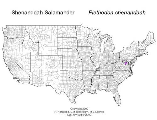 AmphibiaWeb Plethodon shenandoah