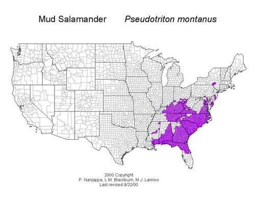 AmphibiaWeb Pseudotriton Montanus - Us amphibian distribution maps