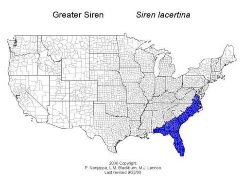 AmphibiaWeb Siren Lacertina - Us amphibian distribution maps
